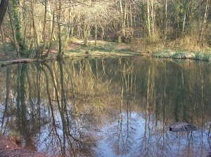 'The Pool of Annwfn, Allt yr-yn woodland pool, by John Davies.